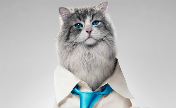 Nine Lives Movie Review {Starring Kevin Spacey, Jennifer Garner & Christopher Walken} #NineLives